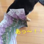 4月20日発行の「うじぶら」に掲載されました!