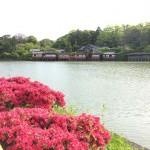 丁度見頃の牡丹と、間に合ったキリシマツツジ。乙訓寺・長岡天満宮のガイドツアー開催しました。