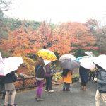 京都ランチの会、嵐山紅葉ミステリーツアーのレポート