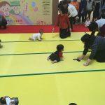 桜花賞よりも熾烈なレースが京都で開催されたのをご存知でしょうか?ハイハイレース出場