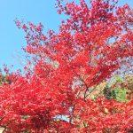 嵐山紅葉ツアー&あっちこっちプロジェクトのスペース立ち上げ!