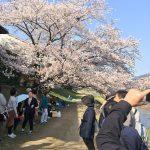 桜満開の京都!まさにピークの日に桜ミステリーツアー開催しました